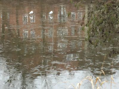 Dünnes Eis auf dem Teich trägt schon die Waswservögel